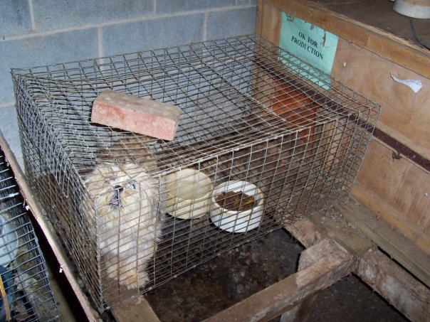 Puppy Mills in North Carolina